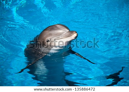 Dolphin baby - stock photo