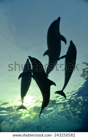 dolphin family swimming, underwater shot  - stock photo