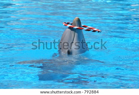 Dolphin in blue water playing with red and white striped hoop in Aquarium - stock photo