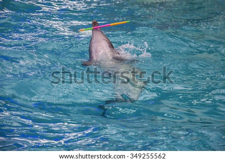 Dolphin in dolphinarium with hula hoop - stock photo