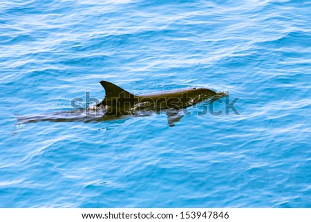 Dolphin in the Mediterranean Sea.