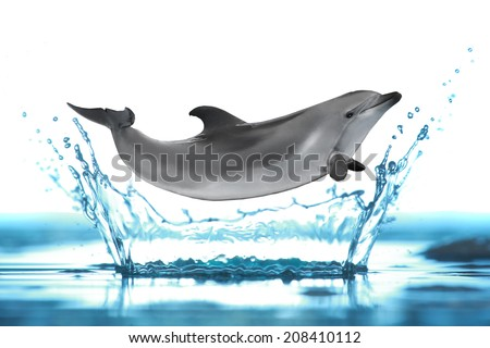 dolphin isolated on a white background - stock photo