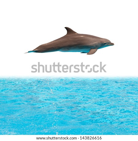 Dolphin jumping in the pool on white background - stock photo