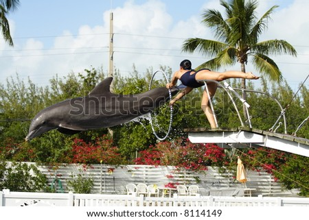 Dolphin Jumping through a Hoop - stock photo