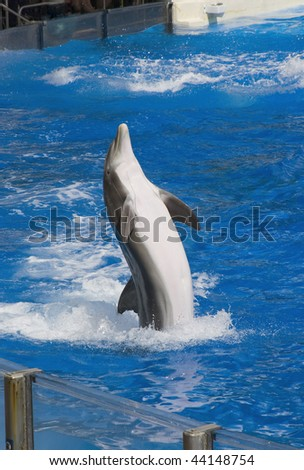 Dolphin performs during the show - stock photo