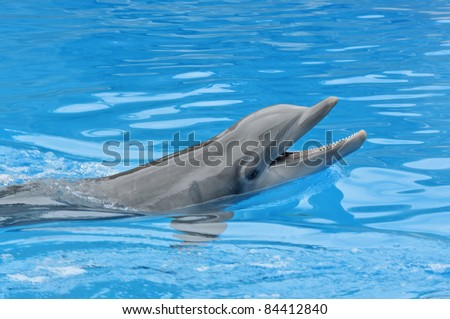 Dolphin Smile. A dolphin looking up at its trainer waiting for his next command - stock photo