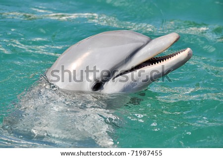 Dolphin Smiling Close Up in Water - stock photo