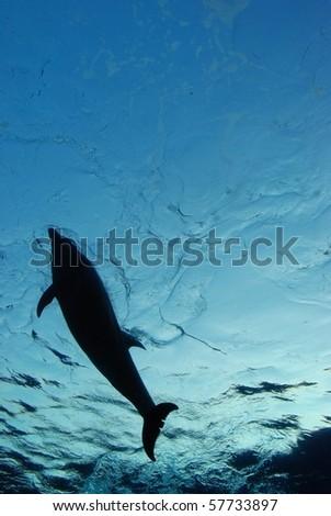 dolphin swimming - stock photo