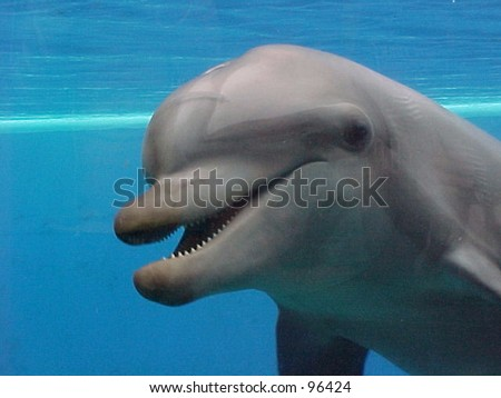 dolphin underwater - stock photo