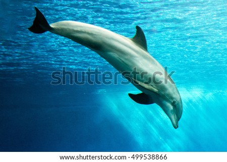 dolphin underwater in aquarium looking at you