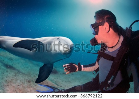 dolphin underwater on reef background looking at you - stock photo