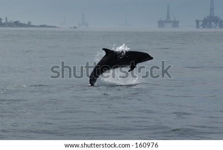 Dolphin Vs Oil Rigs - stock photo