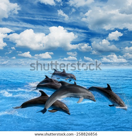 Dolphins jump in blue sea, white clouds in sky - stock photo