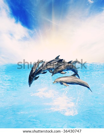 Dolphins jumping in the sea - stock photo