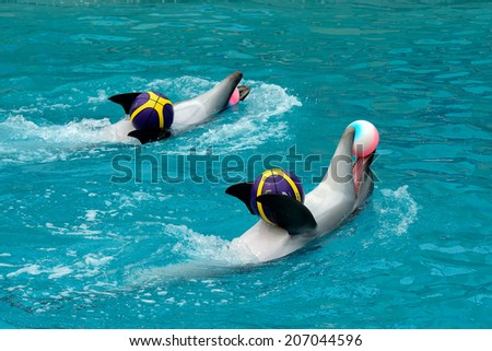 Dolphins show presentation with objects - stock photo
