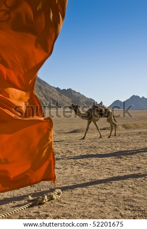 Domedary camel with red flag in the foreground. Sharm el Sheikh, Red Sea, Egypt. - stock photo