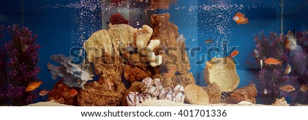 Domestic aquarium with collection of gold fishes. House decoration. Beautiful underwater life.  - stock photo