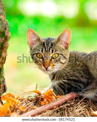 Domestic cat in the garden - stock photo