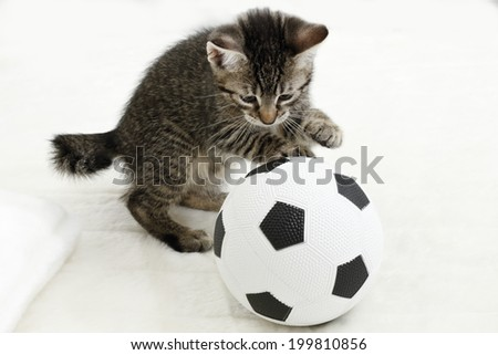 Domestic cat, kitten playing with soccer ball - stock photo