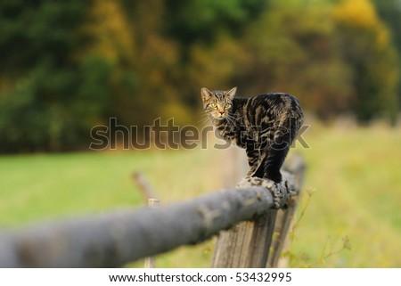 Indoor cat upset by outdoor cat