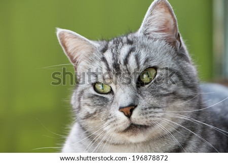 Domestic cat lying on a chair - stock photo