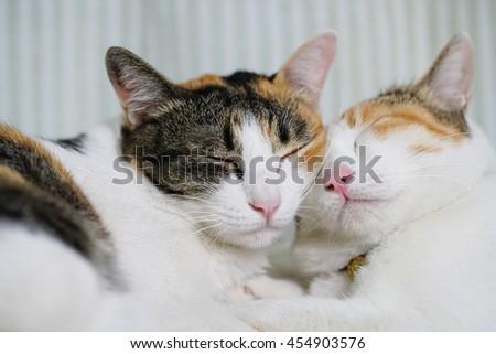Domestic cat lying on the bed