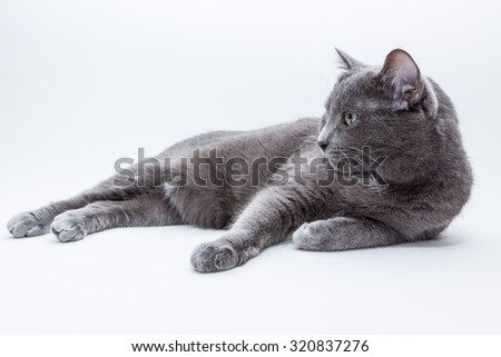 Domestic Cat on Bright Background - stock photo