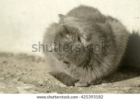 domestic cat on the streets, basking in the sun - stock photo