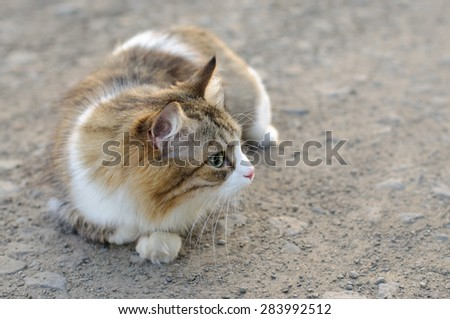 Domestic Cat Outdoors - stock photo