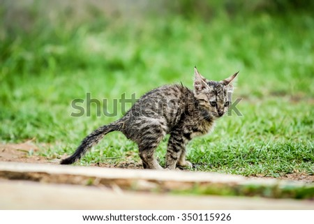 Domestic cat playing in the garden - stock photo