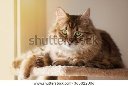 Domestic cat resting at the sun light - stock photo