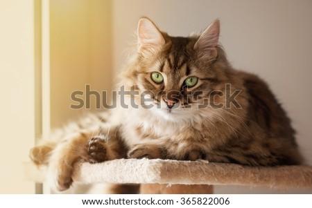 Domestic cat resting at the sun light - stock photo