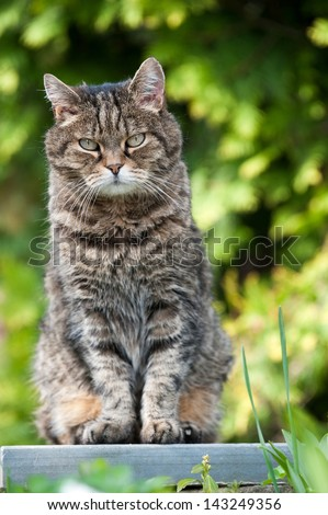 Domestic cat sitting in a garden - stock photo