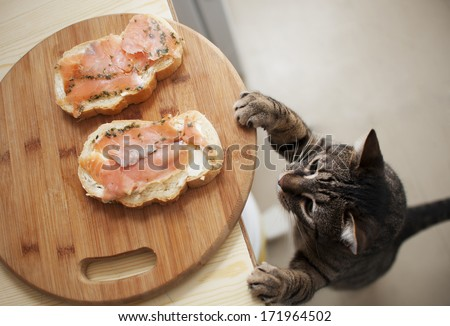 Domestic cat trying to steal fish from sandwich - stock photo