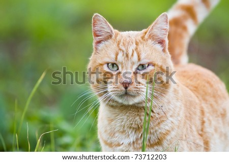 domestic cat with boken effect - stock photo