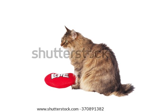 Domestic cat with soft red heart. Valentin theme - stock photo