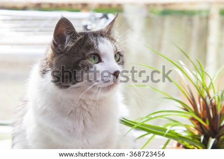 Domestic grey and white cat