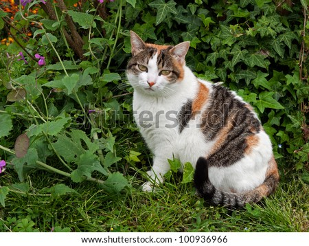 Domestic pet cat in the garden with honesty and ivy plants - stock photo