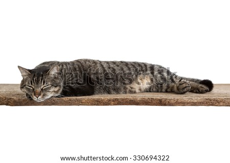 Domestic shorthair tabby cat in full length laying down on a board taking a nap isolated on white background - stock photo