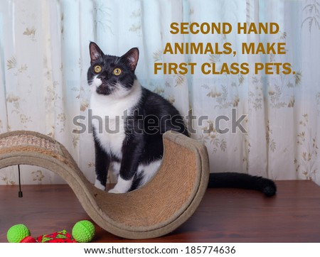 DOMESTIC STRAY CAT ADOPTION POSTER 3.  Can be used for animal charity, and shelters to help find strays and lost cats new homes. - stock photo
