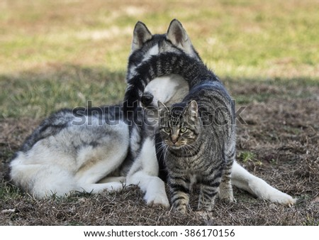 Don't Look - Focus is on the cats face. - stock photo