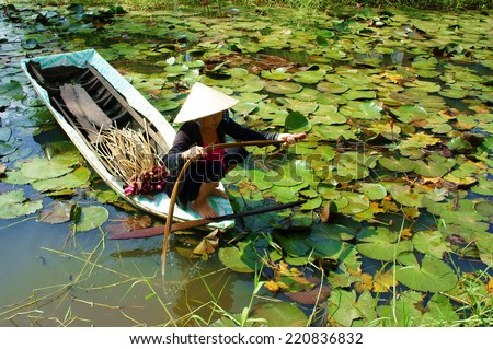 DONG THAP, VIET NAM- SEPT 23: Asian farmer sitting on row boat, pick water lily, one food from nature, aquatic plant at Mekong Delta, water-lily as vegetable in Vietnamese dish, Vietnam, Sept 23, 2014