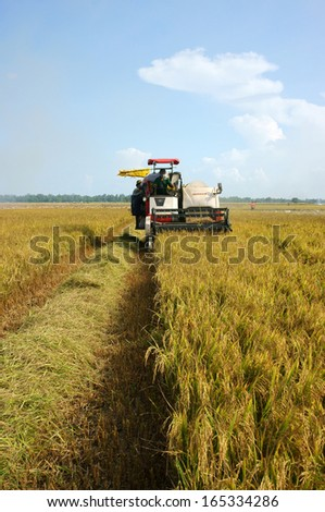 DONG THAP, VIET NAM- SEPTEMBER 12: Farmer harvest rice on ripe paddy field by combine harvester in Dong Thap, Viet Nam on September 12, 2013