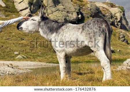 Donkey close up portrait on mountain background