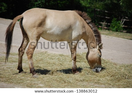donkey eating hay, profile view - stock photo