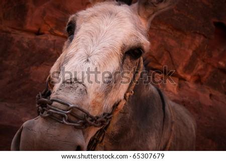 Donkey face - stock photo