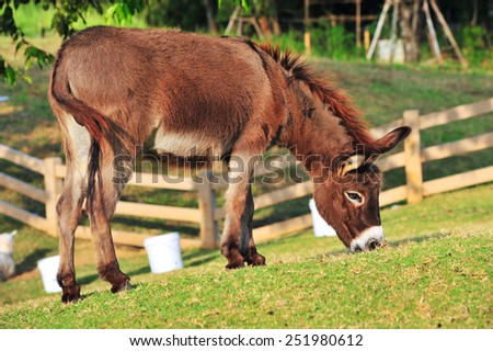 Donkey Farm Animal brown color standing on field grass - stock photo