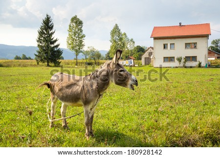 Donkey grazing on a ranch. Around him, the mountains and the house. - stock photo