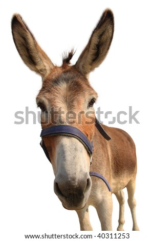 Donkey head isolated on white - stock photo
