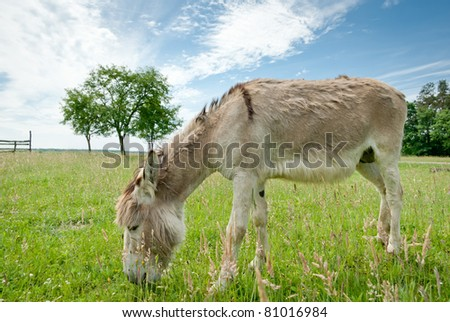 Donkey in a Field in sunny day, animals series - stock photo